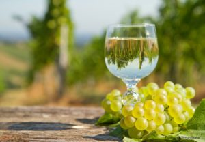 Cape Cod Winery Tours