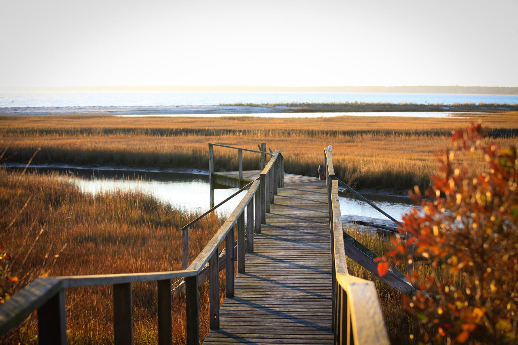 Dock stretches into Cape Cod salt marsh. In winter the grasses turn orange and brown.