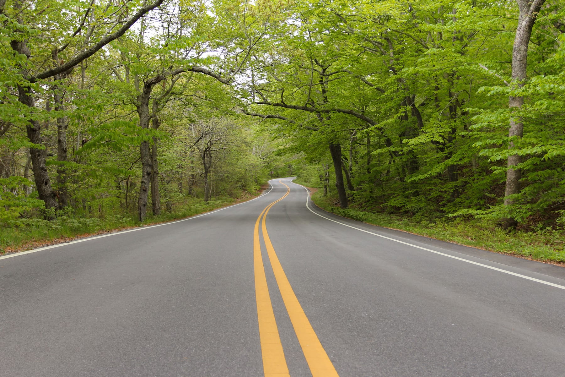 Winding road with trees on both sides.