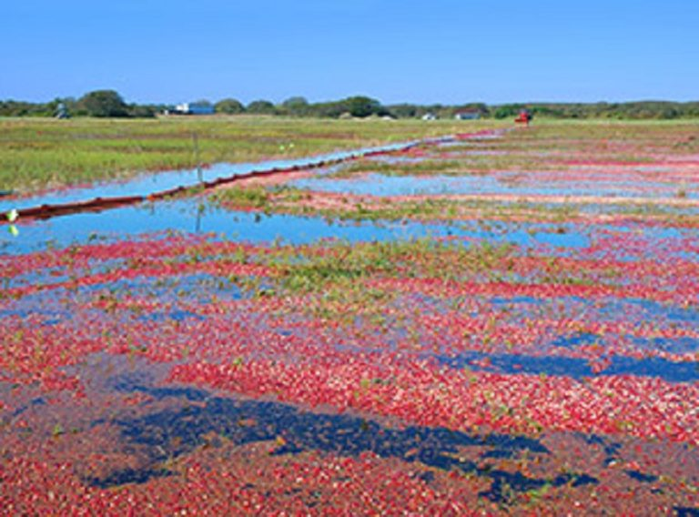 cape cod marthas vineyard cranberry farm Photo and Video Gallery | Candleberry Inn
