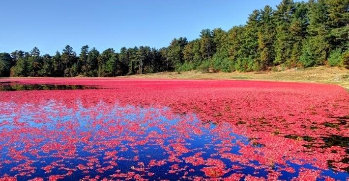 Cranberry Bog Tours look at a bog