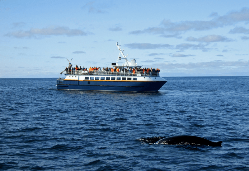Best Cape Cod Whale Watching Tours