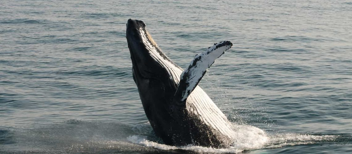 Whale Watching Tour Cape Cod Brewster