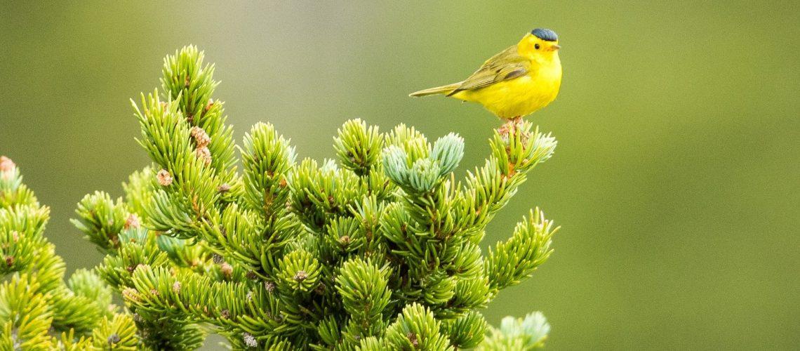 Bird Watcher's General Store
