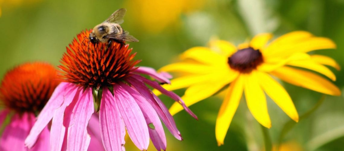 Bee Pollinating Wildflower